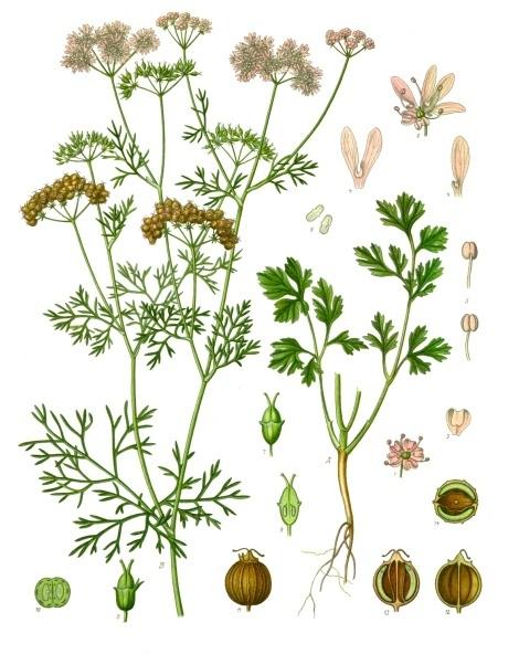 Podstawy ziołolecznictwa w ajurwedzie